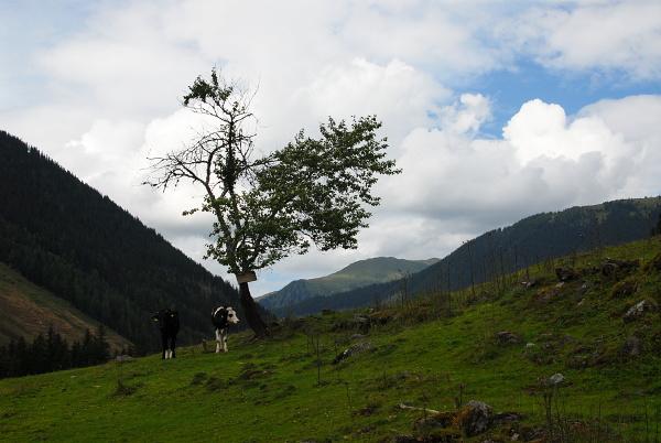 Braeualm in Austria