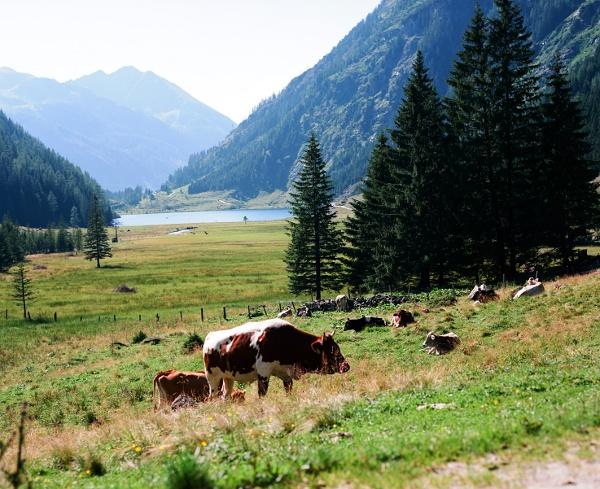 Kaltenbachalm  in Austrai