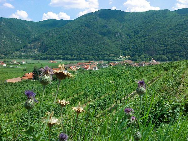 Woesendorf in der Wachau in Austria
