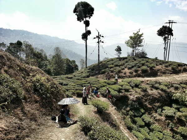 Darjeeling in India