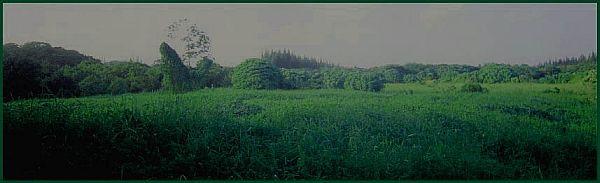 Fern Forest Hawaii